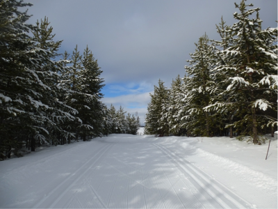 Numerous LOOPS and ROUTES, offering a fabulous variety of skiing and snowshoeing options.
